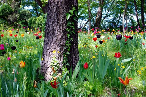 parco giardino sigurt 224