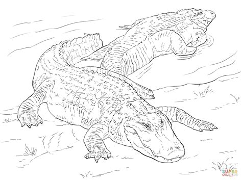what color are alligators two american alligators coloring page free printable