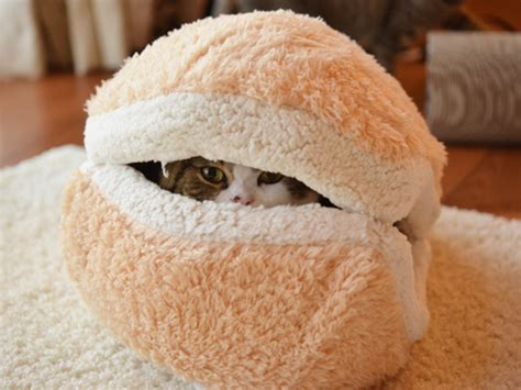 this cat burger bed will turn your cat into an adorable