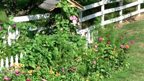 easily plant flower seed   beautiful garden