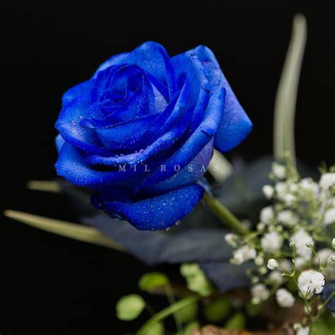 imagenes de rosas azules pin rosas azules facebook on pinterest