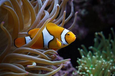 Professional Aquarium Pictures  Fish tank cleaning