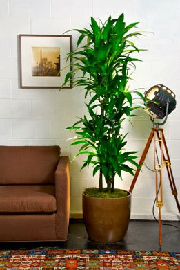 Indoor Plants For Interiors A Top 10 Best Indoor Plants Houston Interior Plants