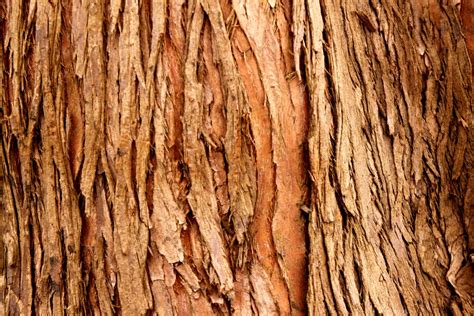 tree bark by sofieycraft on deviantart