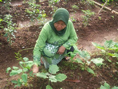 Bibit Tanaman Toga edisi januari februari 2012 kwt hijau daun keroncong