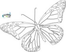 Monarch Butterfly Outline by Butterfly Outline Printable Az Coloring Pages