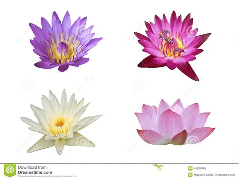 buddhist symbol lotus flower lotus flower symbol buddhism www galleryhip the