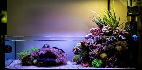 Where To Put Plants In House wawawang 2015 featured reef aquariums nano reef com