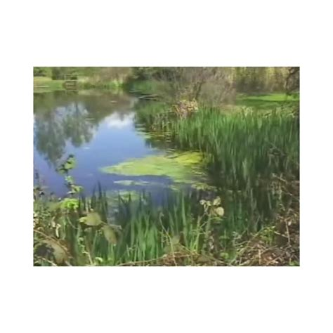 the biology of lakes and ponds biology of habitats series books the biology of lakes ponds streams and wetlands dvd 45