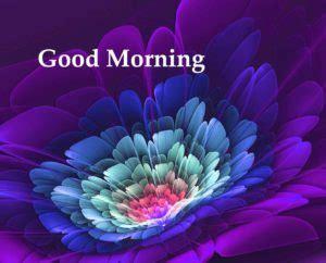 flower good morning hd images wallpaper  whatsapp