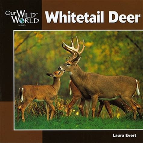 whitetail deer facts and strategies books whitetail deer by evert f mcgee paperback