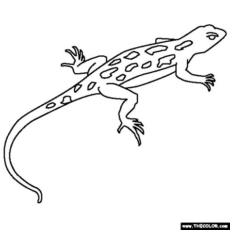 Coloring Page Lizard by Coloring Book Lizards Lizard Coloring Page Art Animal