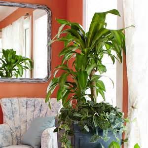 large low light houseplants 10 best low light houseplants costa farms