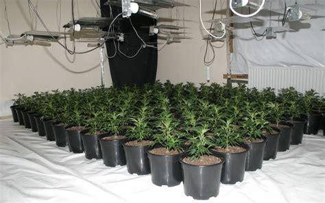 construire sa chambre de culture une culture de cannabis d 233 couverte gr 226 ce 224 une fuite d eau
