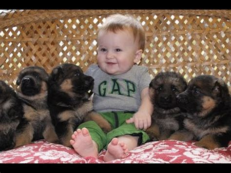 puppies with babies adorable puppies and kittens with babies compilation 2016