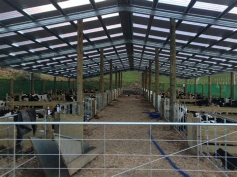 Calf Rearing Shed Design calves for sale farrelly calf rearing