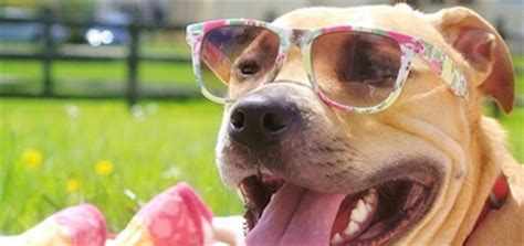 puppies wearing sunglasses we these instagram photos of dogs wearing sunglasses