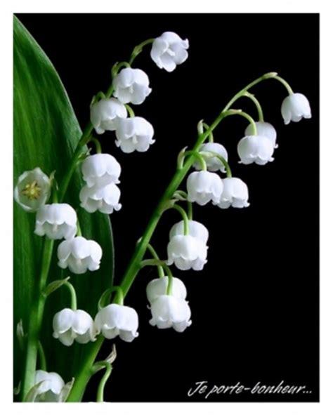 Muguet Fleurs Images by Testeuses De Mai Dlvdm