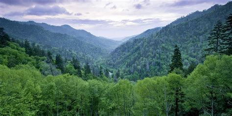 Western Dining Room by Things To Do In Western North Carolina Smoky Mountains