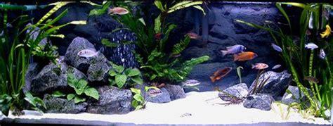 aquascaping african cichlid aquarium cichlid aquarium lake malawi i will be getting