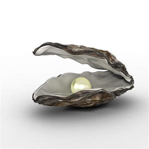 oyster shell 3d oyster shell