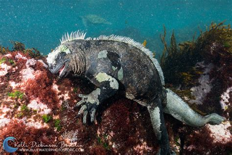 galapagos best islands galapagos scuba dive travel guide best liveaboards best