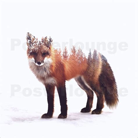 Poster Fox by Peg Essert Fox Poster Posterlounge