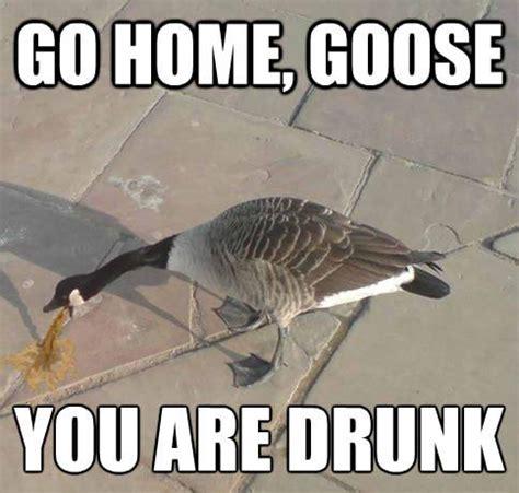 Drunk Memes Tumblr - magpie goose memes