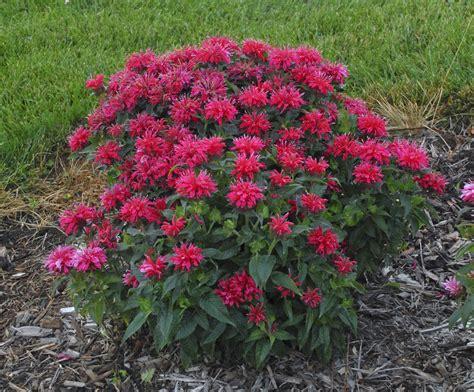 28 best sun loving flowering shrubs sun loving flowering shrubs mike s garden top 5 plants