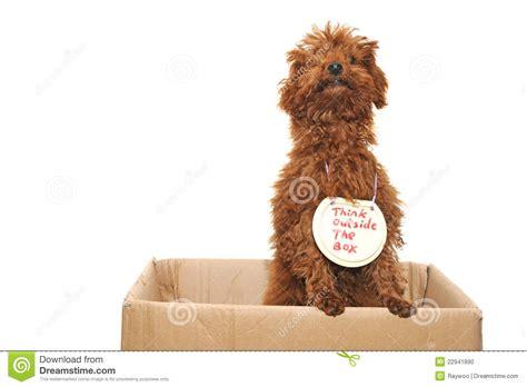 pooch tattooing outside the box thinking outside the box stock photo image 22941890