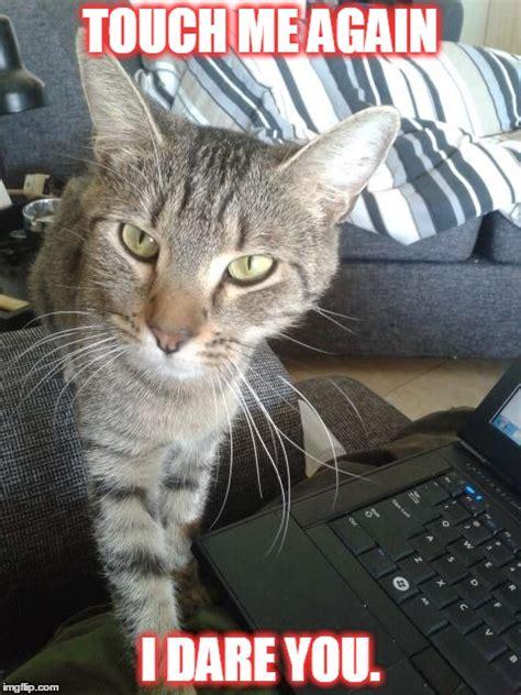Sassy Cat Meme - image tagged in cats sassy asshole ninja imgflip