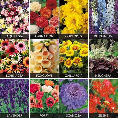 spectacular perennials collection cottage garden plants