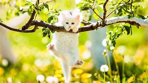 wallpaper cute spring cute spring desktop wallpaper many hd wallpaper