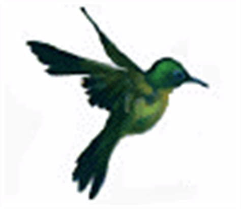 free animations free animated gifs free animations and free animated birds gifs free bird animations and clipart