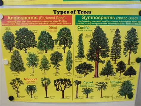 type of trees tree types natural adorable ness pinterest game concept