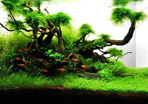 aquascape layout pdf layout 71 james starr marshall tropica aquarium plants