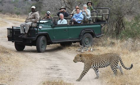 Safety With Lions On Safari Africa Geographic