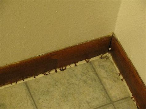 mold mites in bathroom mold mites in bathroom 28 images mold and mildew in
