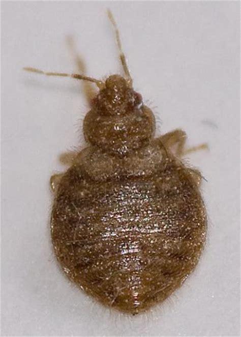 hot shot bed bug fogger hot shot bed bug and flea killer 2 oz aerosol fogger 3