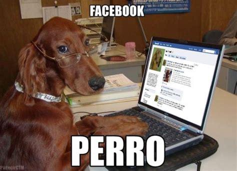 imagenes animales chistosos image gallery imagenes de perros chistosos