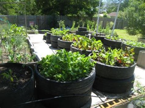 Recycled Container Gardening Ideas Henry Reed S Recycled Tire Container Garden