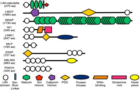 protein domain opinions on protein domain
