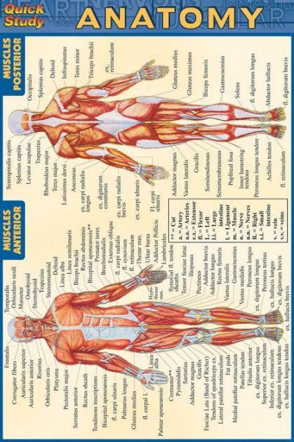 human anatomy coloring book barnes noble anatomy by barcharts 9781572227576 paperback barnes