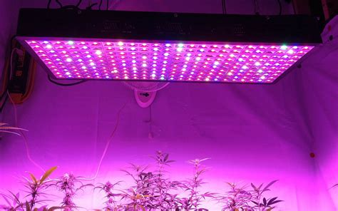 lade grow 5 truths about growing bigger buds with led than hps