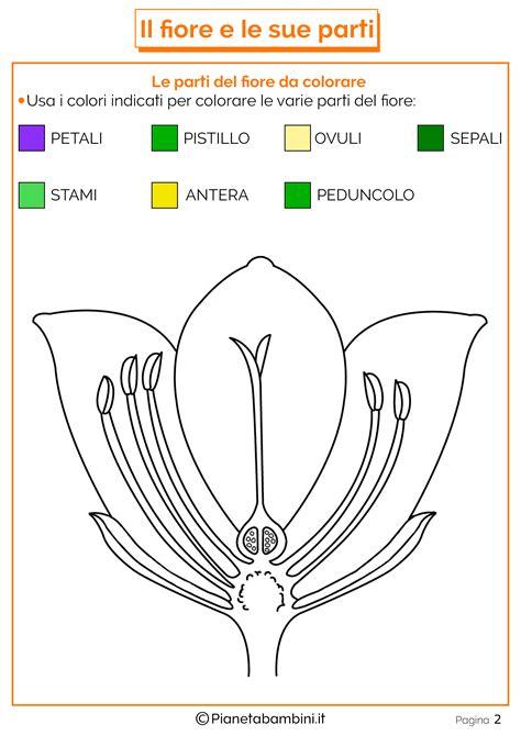 le parti fiore scuola primaria tante schede didattiche sul fiore e le sue parti per