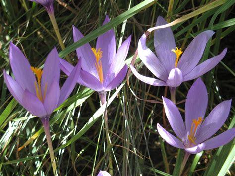 imagenes flores salvajes 10 hermosas flores silvestres 1001 consejos
