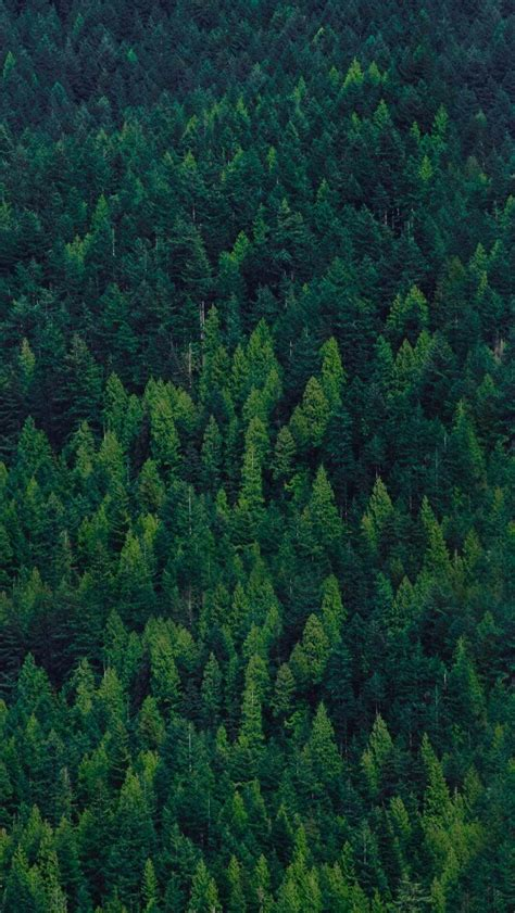 green forest trees iphone wallpaper iphone wallpapers