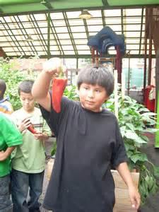 school yard garden in inner city dc globalgiving