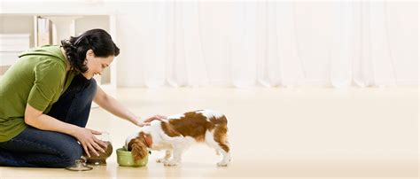 when to feed puppies how to feed your purina new zealand purina