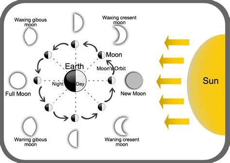 lunar phases diagram perigee 365outside